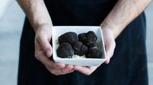 truffle festival